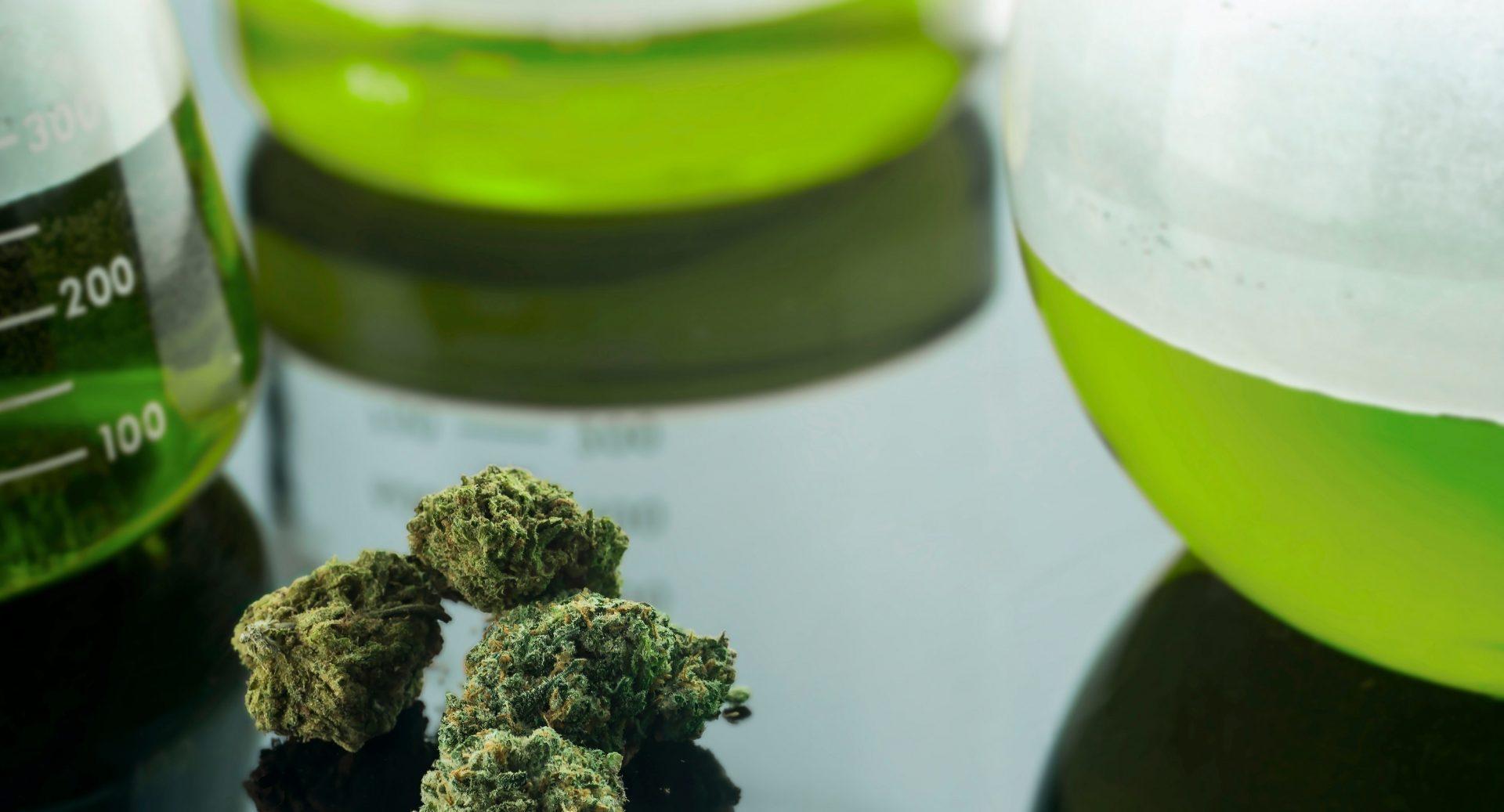 Nouveau programme en Production et transformation du cannabis